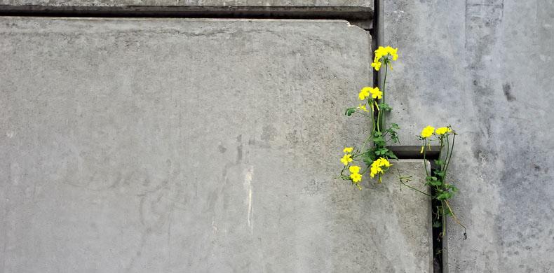 resistencia flor hl