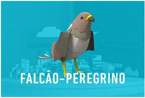 falcao_peregrino